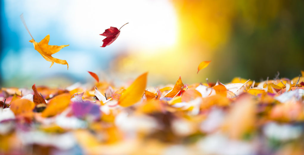 Attack of the autumn leaves – Avoiding blocked drains